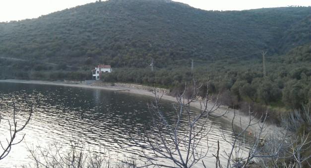 Marmara Adası Zeytinlik